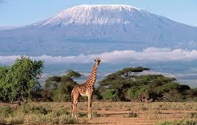 Trekking ascensión Kilimanjaro